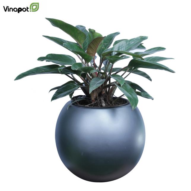 vinachau.vn