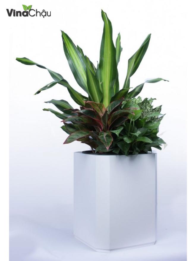 Ứng dụng chất liệu MDF làm chậu trồng cây