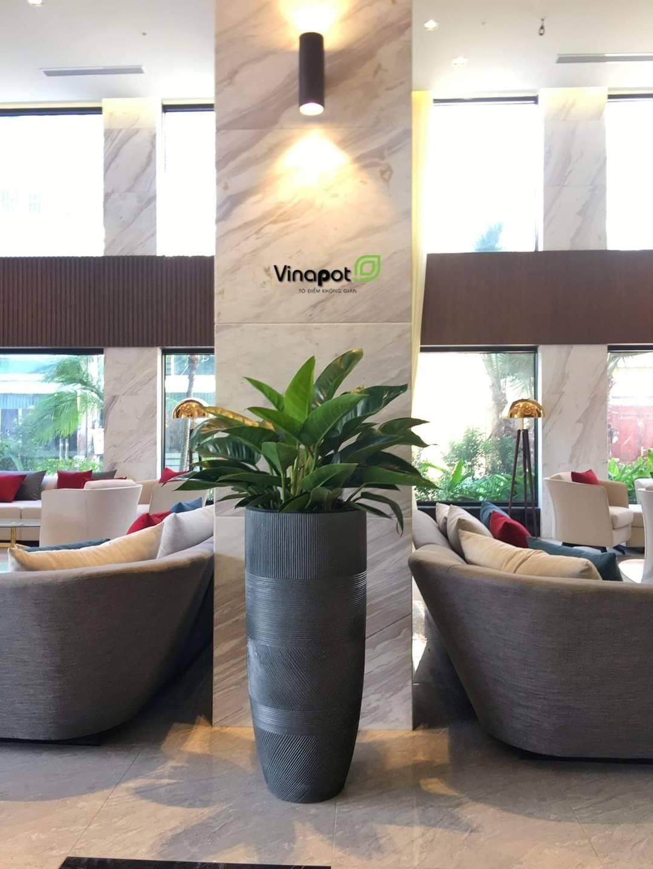Thiết kế tinh tế với chậu cây nhà Vinapot