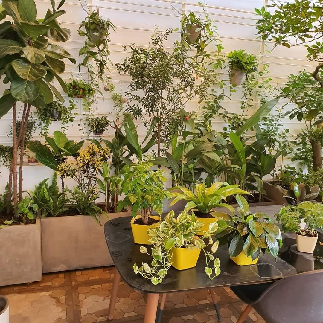 Chậu gỗ nhựa Composite được sử dụng cho các không gian hiện đại từ khách sạn, resort, trung tâm thương mại đến sân vườn, nhà cửa