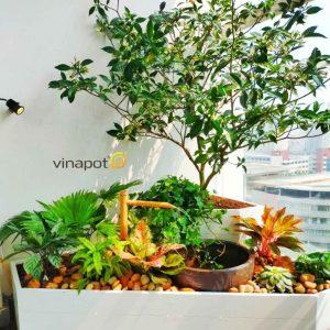 Chậu gỗ nhựa tiểu cảnh Vinapot